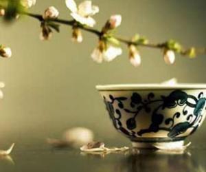 鉴别白茶与白茶的评审